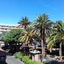Tropical Tenerife